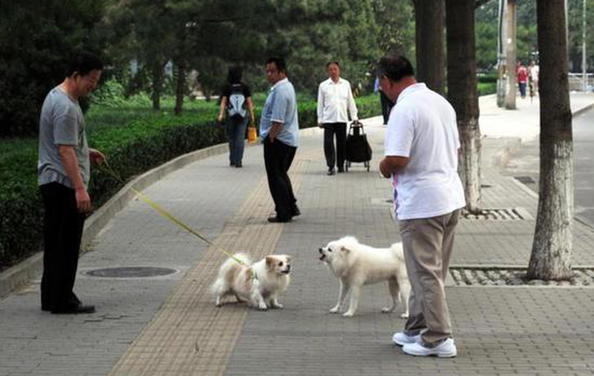 哪些狗能养,犬只伤人后怎么办?银川市养犬管理条例解读