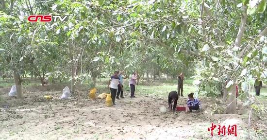和田农民阿卜杜:从贫困户到核桃大户 带动同乡百余人就业