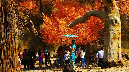 新疆库车县举办第二届原生态胡杨旅游文化推介活动