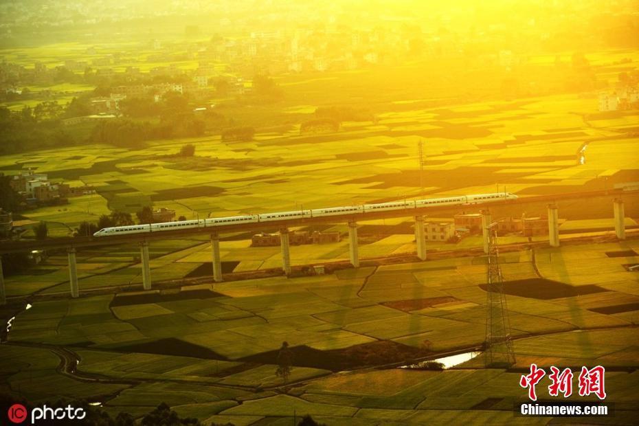广西晚稻进入收获期 列车穿行美如画