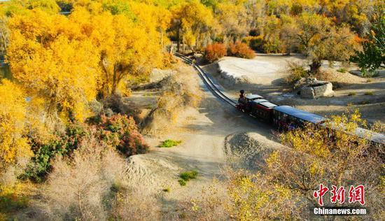 新疆輪臺縣逾40萬畝胡楊林迎來最美季節