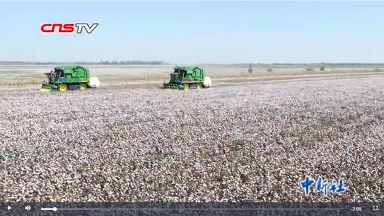 新疆棉花大面積采摘期 部分地區已罕見采棉工