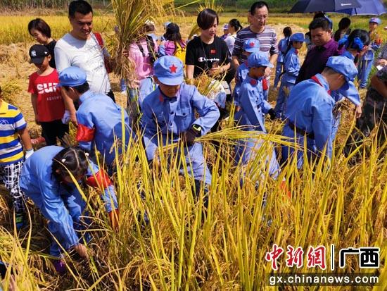 學生揮鐮割稻