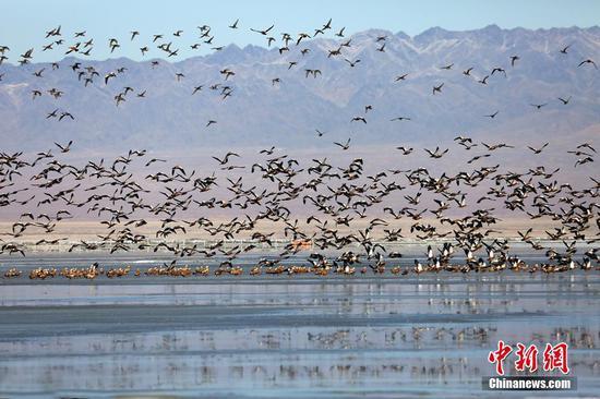 新疆巴里坤湿地成候鸟迁徙途山东快三精准计划app—主页22270.COM的天然驿站