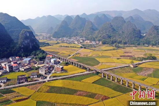 柳江区成团镇数万亩晚稻成熟,宛若金色地毯铺在山间。 张子潇 摄