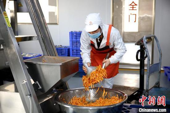 广西螺状元食品科技股份有限公司生产线,工人将酸笋放入自动包装设备。 朱柳融 摄