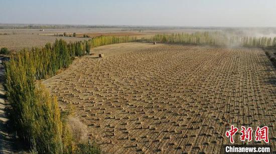 俯瞰新疆南部县域储备越冬饲草料场景