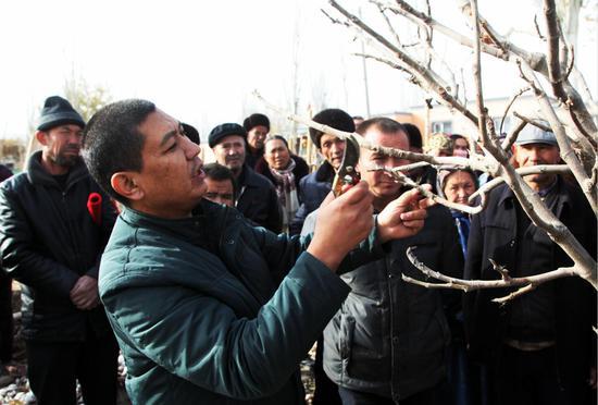 新疆岳普湖县:220户林果种植大户这个冬天很忙
