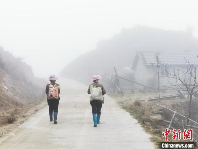 """桂北高寒山區牧場草木""""皆冰"""""""