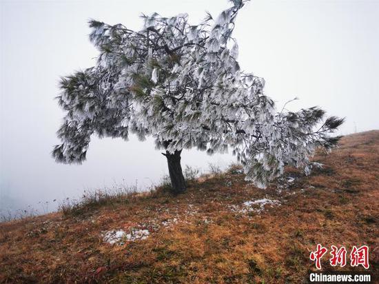 冷空气来袭,摩天岭树上挂满冰凌。 李义成 摄