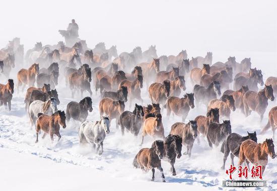 新疆昭苏群马齐鸣踏雪来