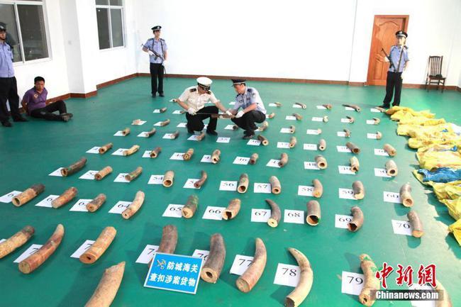 廣西嚴打瀕危物種走私犯罪 查扣象牙近10噸