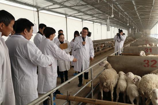 有关人士参观湖羊羊场 浙江省畜牧农机发展中心 供图