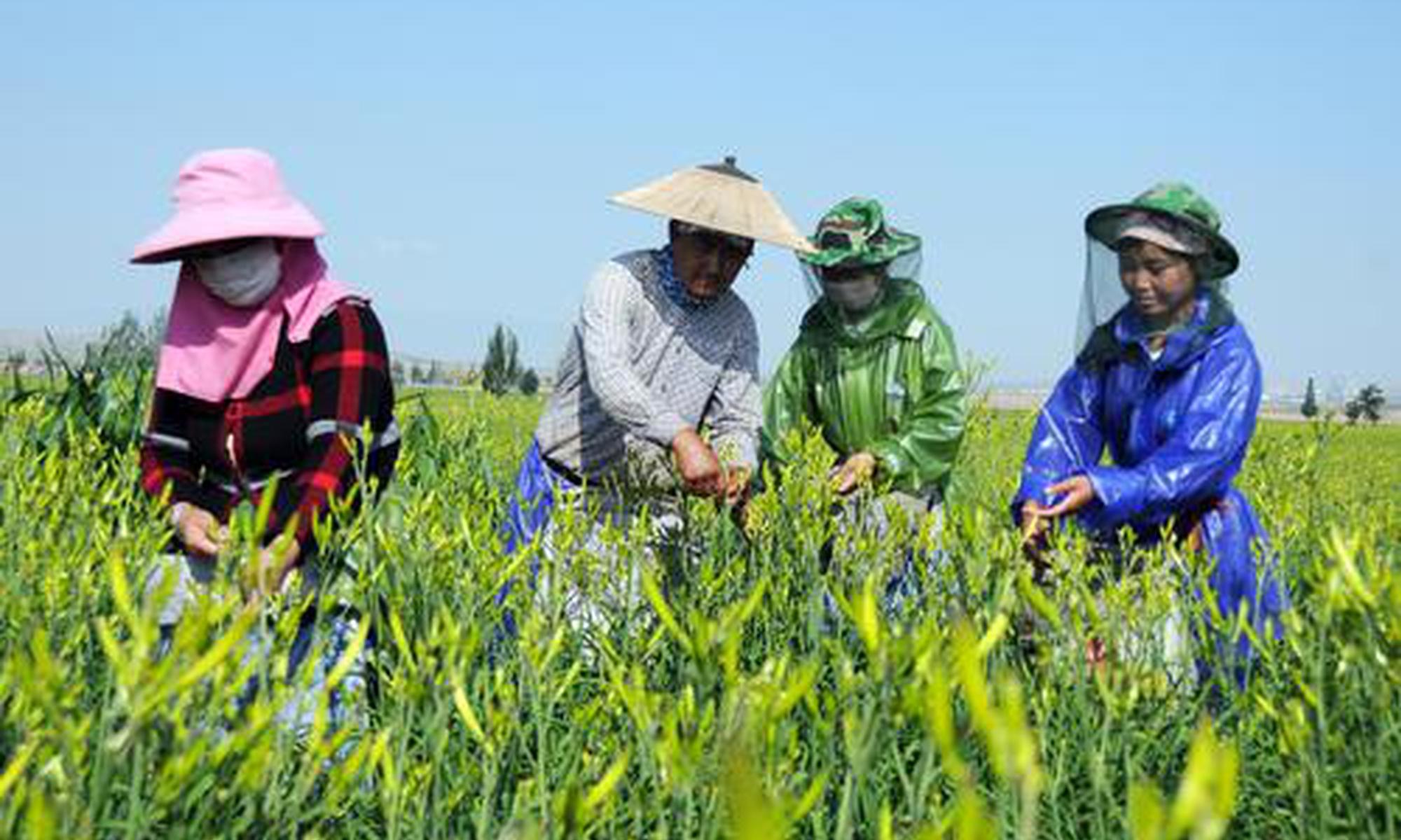 第三批中国特色农产品优势区公示 宁夏盐池黄花菜榜上有名