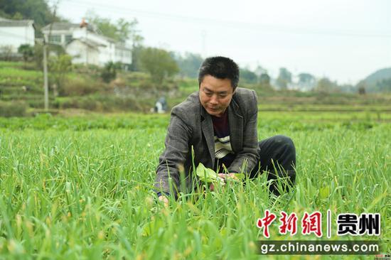 薛占奎在蔬菜基地里勞作