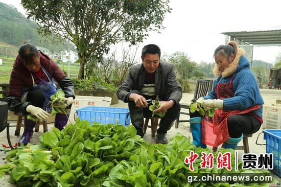 薛占奎同當地村民在摘撿蔬菜