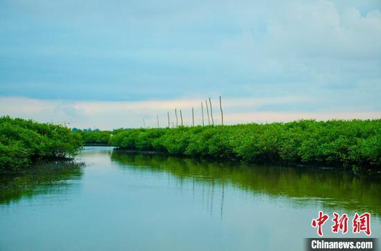 生态良好的广西北部湾沿海 翟李强 摄