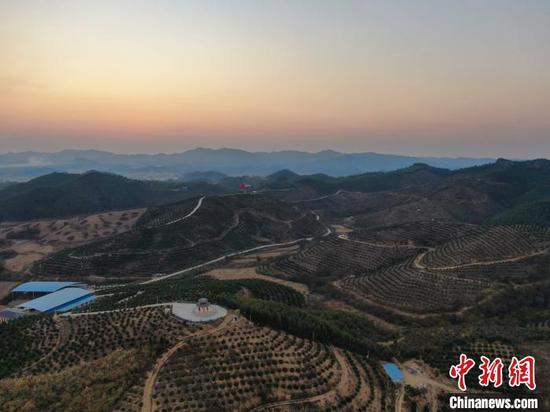 鹿寨蜜橙产业(核心)示范区的4700亩蜜橙集中种植在数十个山头之上。 王以照 摄