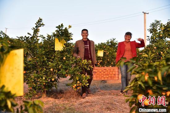 陆华南和覃连香抬着装满蜜橙的筐子走下山。 王以照 摄