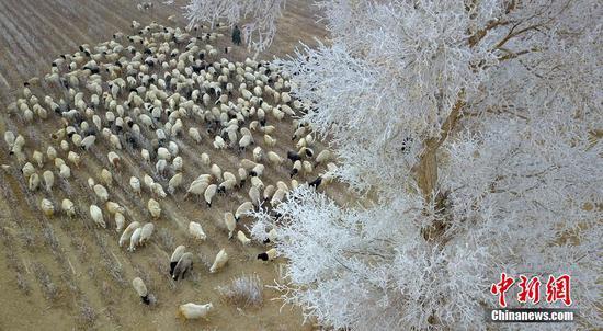 新疆塔里木盆地出现雾凇景观