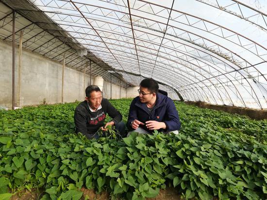 贾广成与肖方龙一起在温室大棚查看紫薯种苗