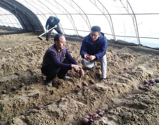 贾广成与张儒明探讨紫薯培育