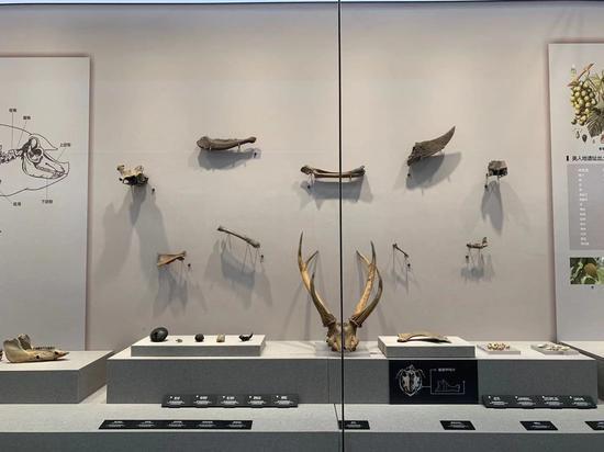 良渚博物院。郭其鈺 攝