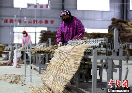 工人正在进行白芒草编制。 朱柳融 摄