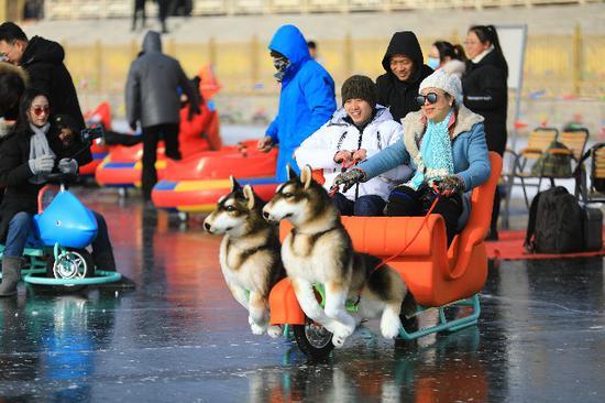 狗狗拉爬犁、抱着冬瓜到处跑 新疆这个地方的冬天真好玩