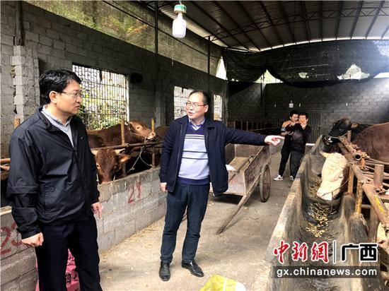 参观走访长富养牛