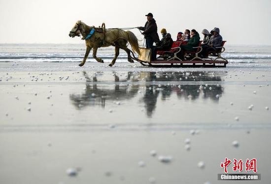 新疆冰雪季 马拉爬犁在博斯腾湖冰面上驰骋