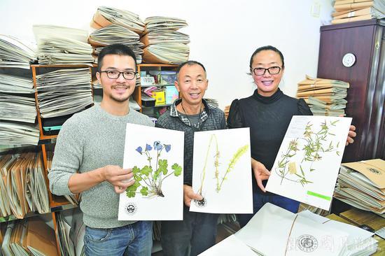 """两种翠雀花首次在新疆发现 其一将命名为""""昭苏翠雀花"""""""