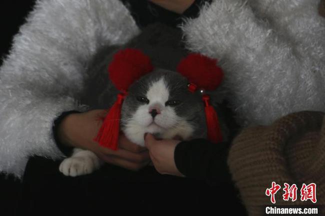 临近春节沙巴体育投注柳州宠物摄影生意火爆