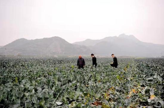 """圖為:""""中國西藍花之鄉""""臨海  臺州海關供圖"""