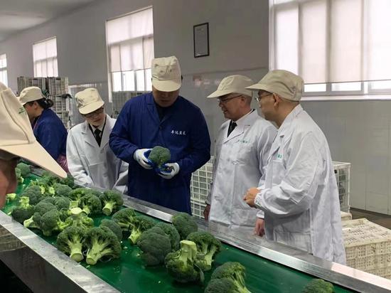 圖為:西藍花加工車間 臺州海關供圖