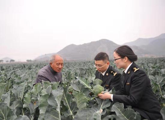 圖為:臺州海關工作人員在田間指導 臺州海關供圖