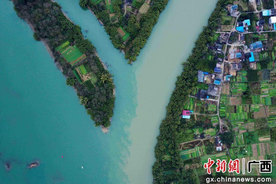 """珠江上游融江今年首現""""涇渭分明""""景觀"""