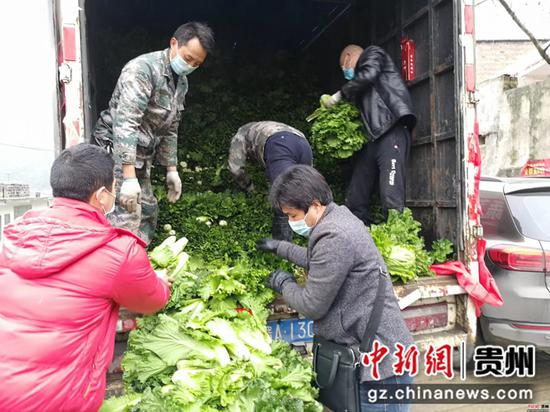 毕节市七星关区普宜镇道角村的村民正在把大白菜装进货车