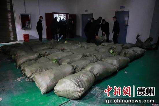 七星关公安分局的仓库里堆满了从货车上下载的大白菜   陈曦摄