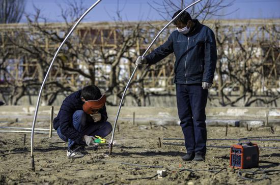 """图为2月11日,新疆巴音郭楞蒙古自治州尉犁县古勒巴格乡家家户户一片繁忙的景象,村民们与""""访惠聚""""驻村工作队正在搭建庭院蔬菜小拱棚。李飞摄"""