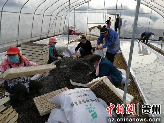 村民正在着手烤烟育苗工作