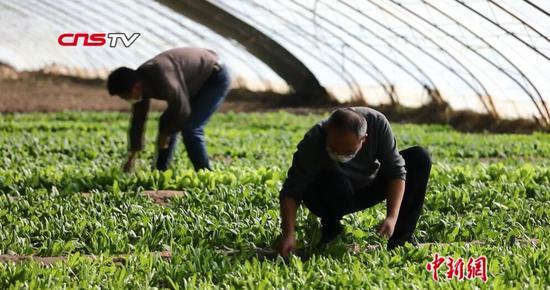 新疆春耕備耕物資貨源整體充足 滿足生產需要