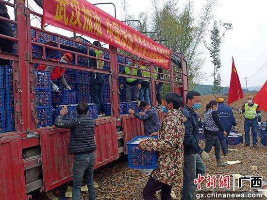 广西鹿寨女孩与乡亲合力捐赠15吨爱心果给湖北