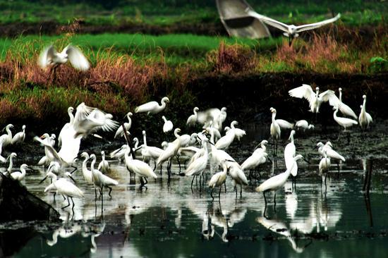 杭州西溪湿地景区 杭州西溪湿地景区供图