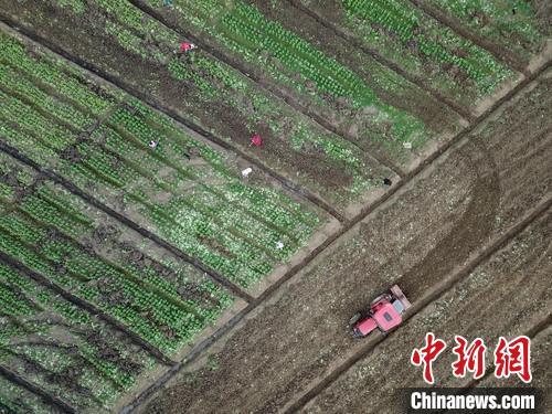 2月18日,航拍贵州黔西林泉镇花卉苗木基地繁忙景象。 瞿宏伦 摄