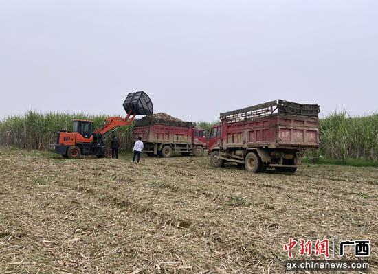 战疫情保生产 广西龙州县上龙乡