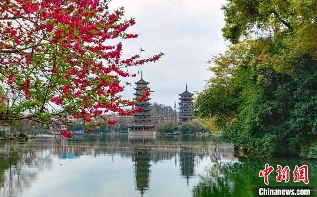 早春二月桂林两江四湖景区桃花盛开吸引游人