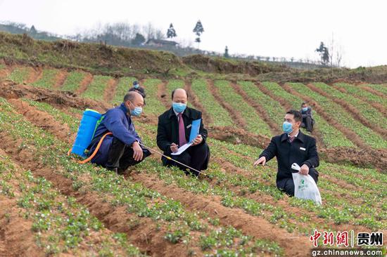 """黄平农商银行一碗水支行信贷员到药材种植基地开展""""复工复产贷""""调查。吴江平 摄"""
