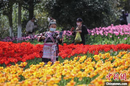 一位穿着少数民族服装的市民在郁金香旁自拍。 瞿宏伦 摄