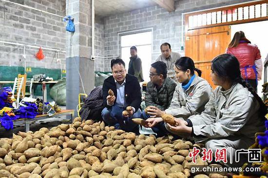图为大唐广西公司采购当地农副产品。大唐广西供图
